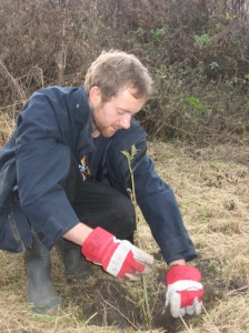 A volunteer planting a tree